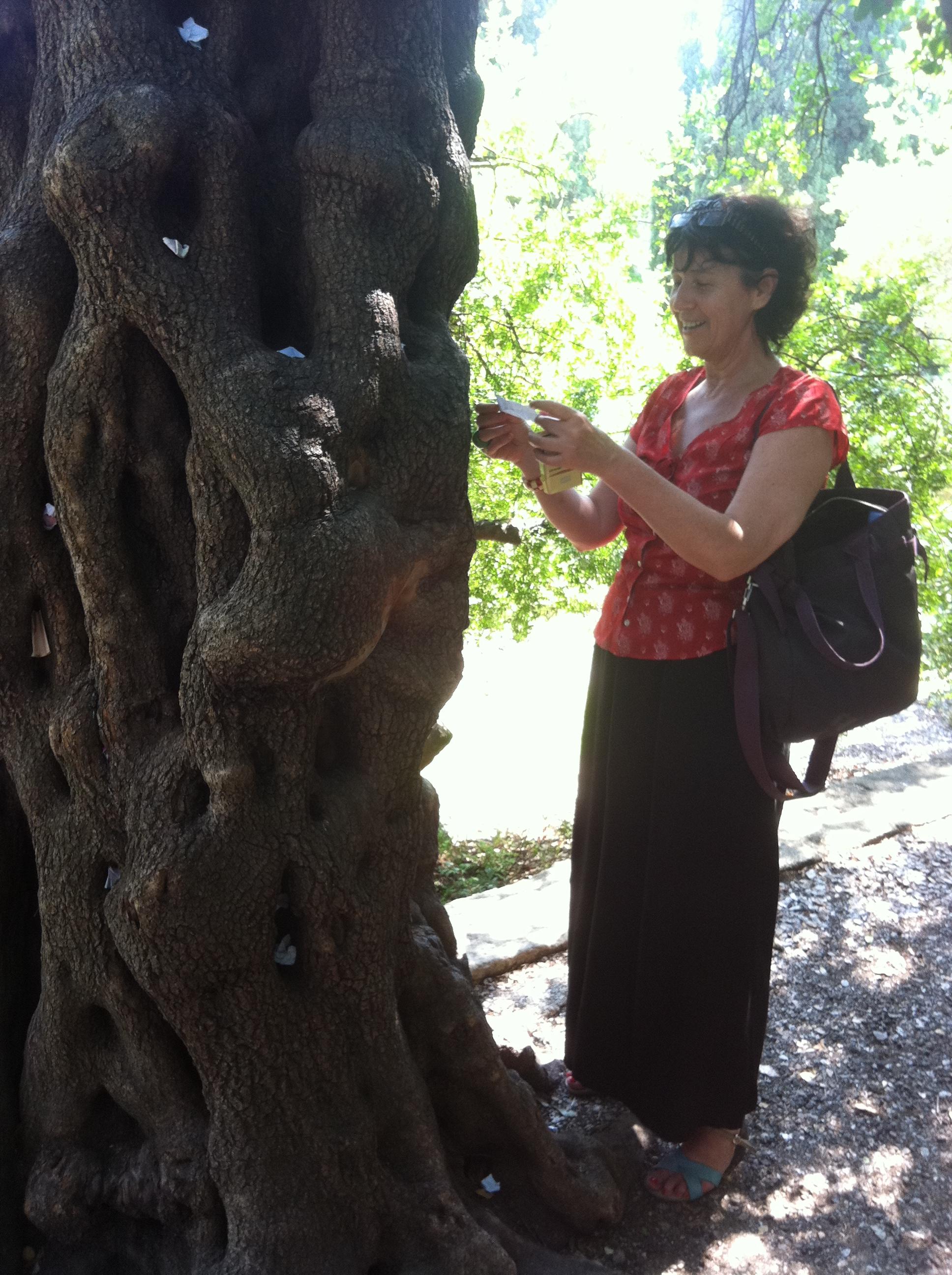 Traces d critures au jardin des plantes de montpellier - Jardin d essence montpellier ...