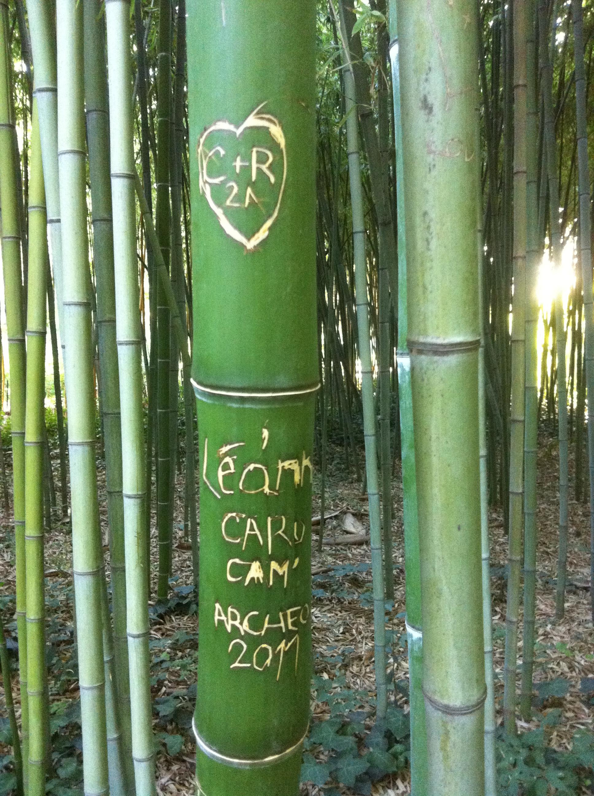 Traces d écritures au jardin des plantes de Montpellier